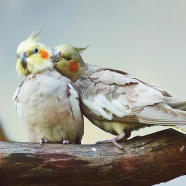 birds-380x380